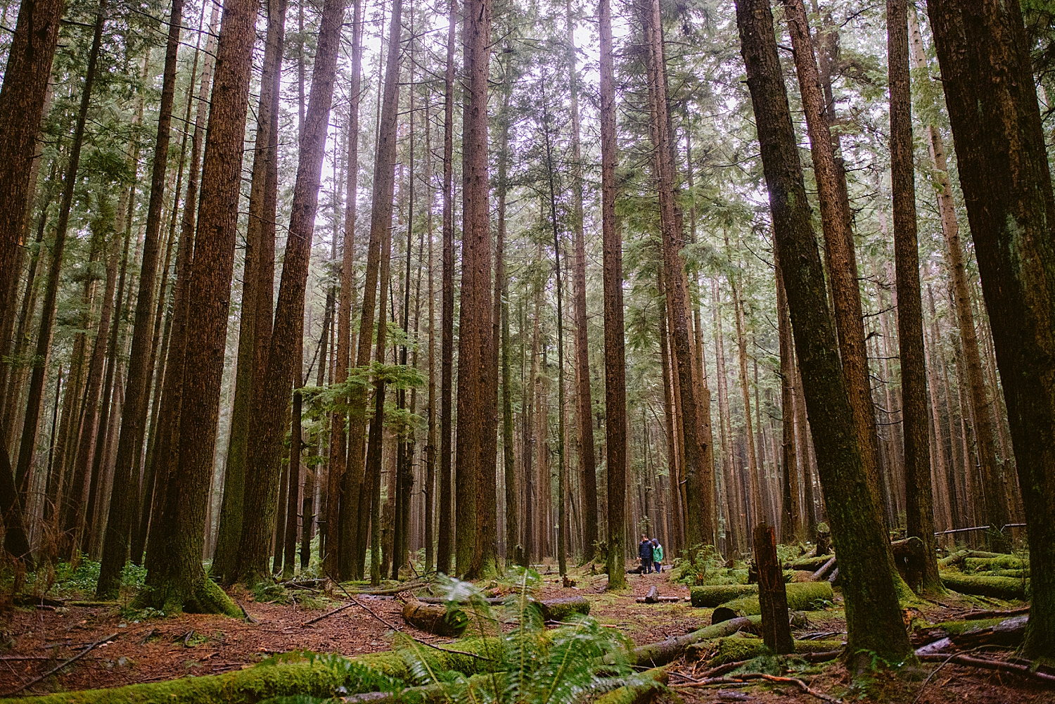 british columbia - pacific spirit park - engagement shoot - vancouver b.c.- maylies lang photography -03.jpg